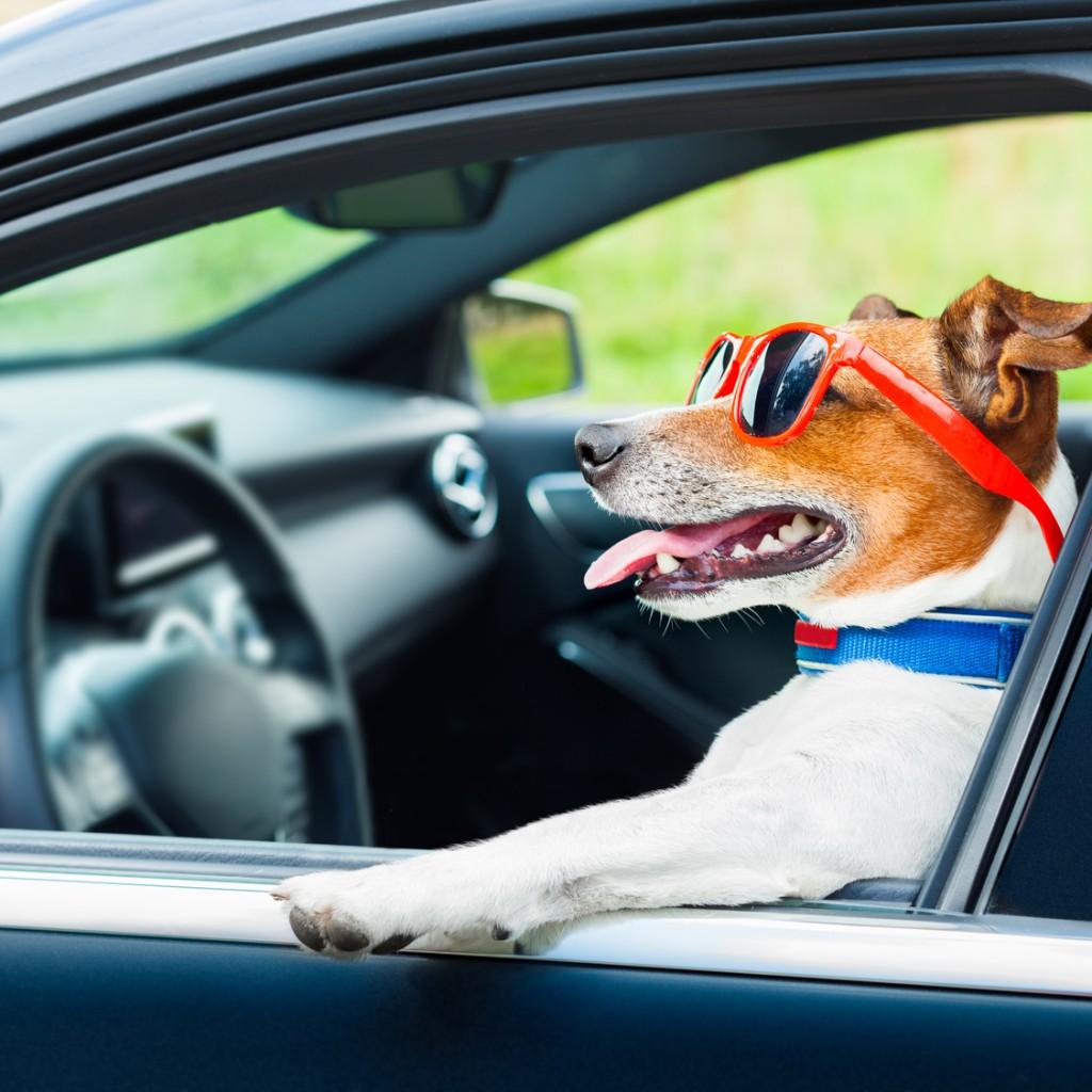 Autos Pet Friendly: mascotas en el auto